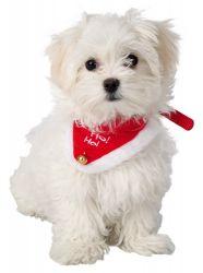Vánoční šátek pro psa 45-55 cm/25 mm M-L