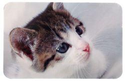 -Prostírání pro kočku pod misky fotka kočky 43x28cm DOPRODEJ