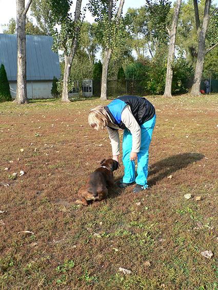 výcvik psa základy