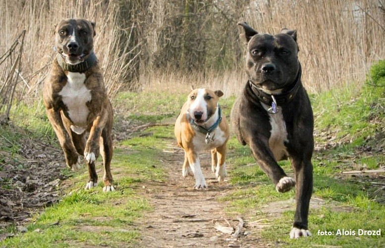 psí sportovec